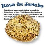ROSA DE JERICO GIGANTE| Comprar en ProductosEsotericos.com